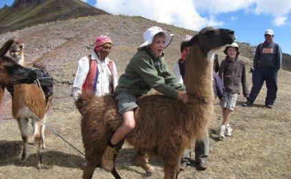 Feedback Llama Tours Peru