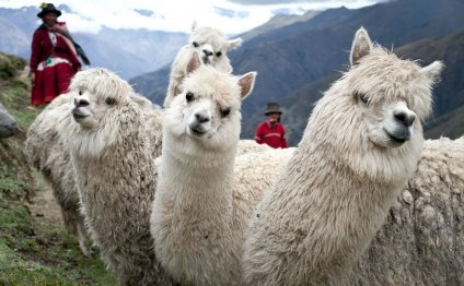 Cool Facts about Peru