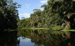 Tortuguero nationwide Park is a couple of water canals which is locally known as the Amazonas of Costa Rica.